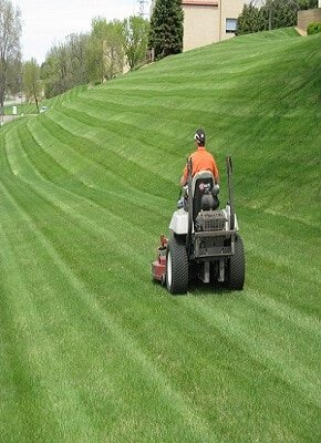 How to Create a Lawn Care Schedule Tips